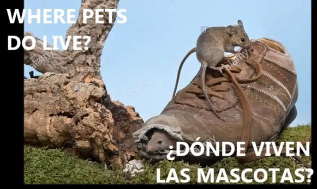WHERE DO PETS LIVE?